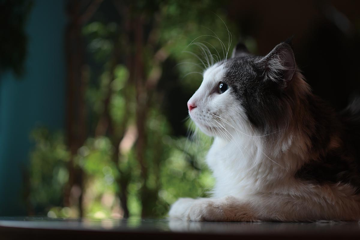 猫咪图片大全可爱野外